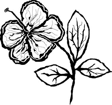 hibiscus-10_