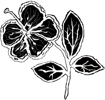 hibiscus-reverse10_