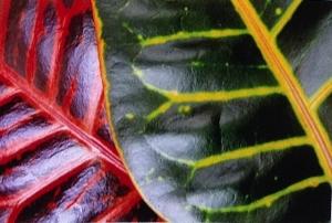 Croton-SBKnappPhoto